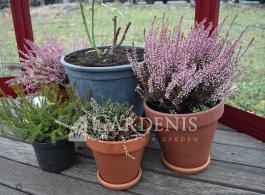 ovalia-greenhouse-siltnamis-flowers-autumn