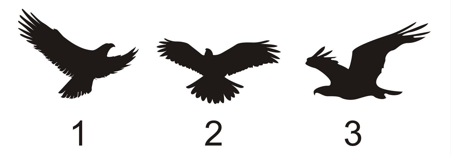 pauksciai-3