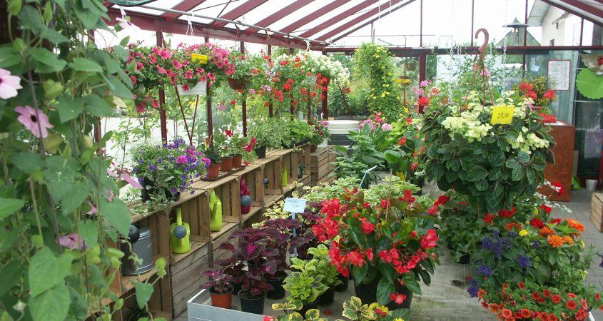 Magna greenhouse Gardenis flower shop