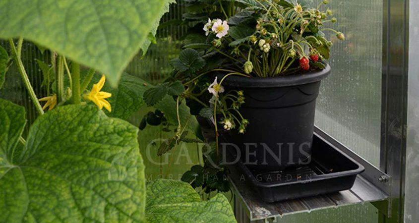 Greenhouse shelf siltnamio lentyna Gardenis