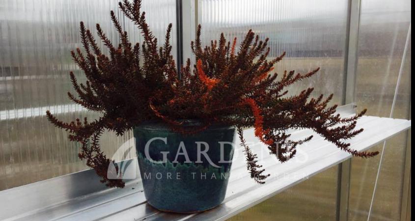[:lt]Lentynėlė šiltnamiui 20 cm gardenis[:sk]Półka aluminiowa do szklarni[:en]Greenhouse alu shelf 20 cm[:]
