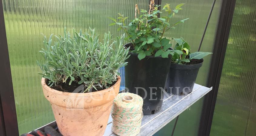 lentynele-siltnamiui-gardenis