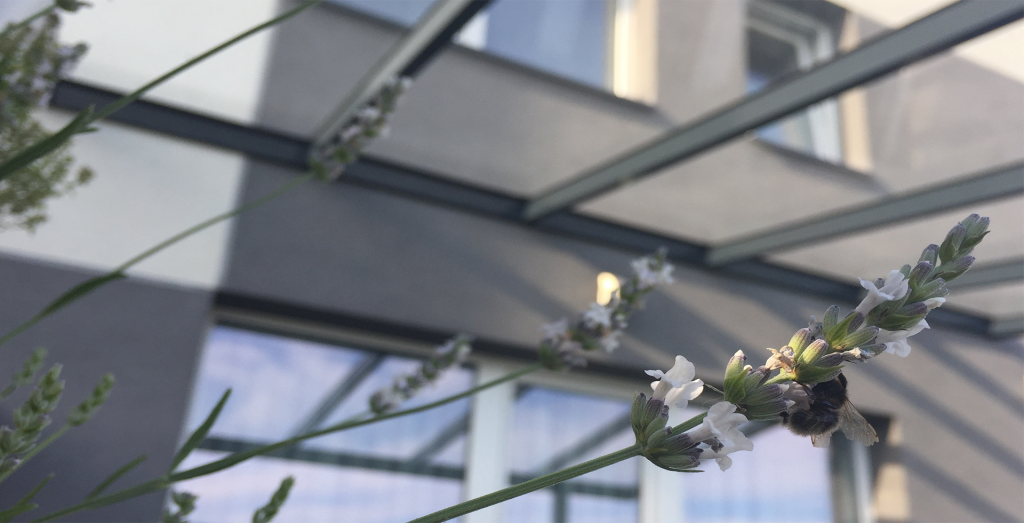 Stogas terasai gr8dinto skaidraus stiklo Gardenis