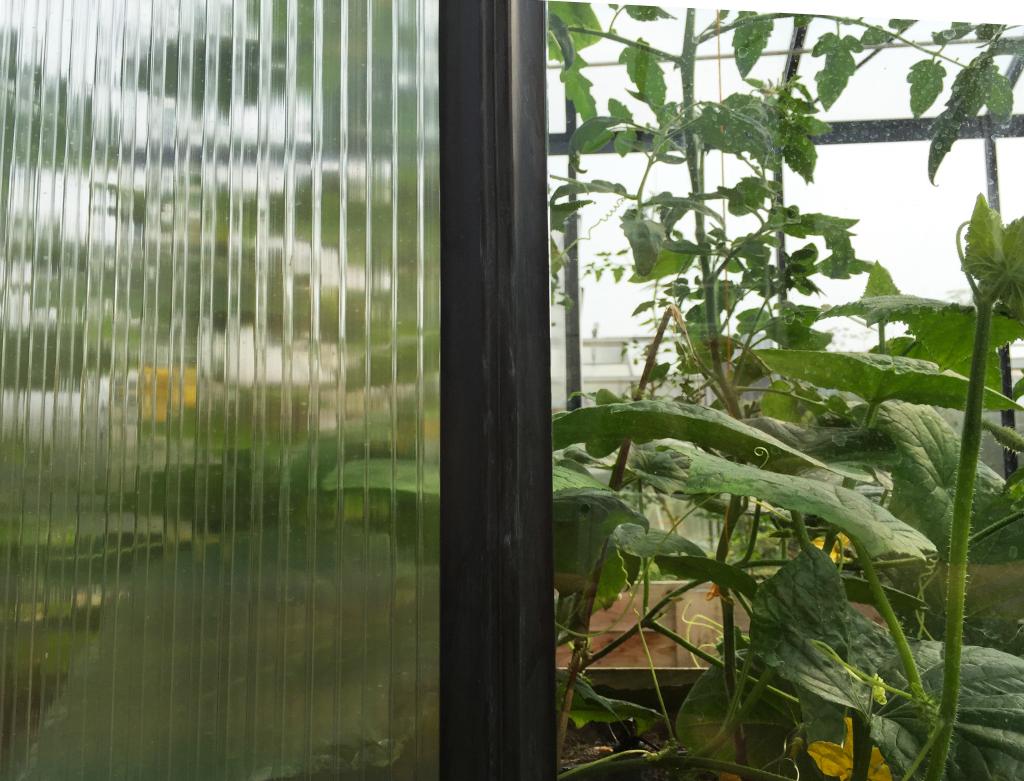 stiklo-ir-polikarbonato-dangos-Gardenis-siltnamyje